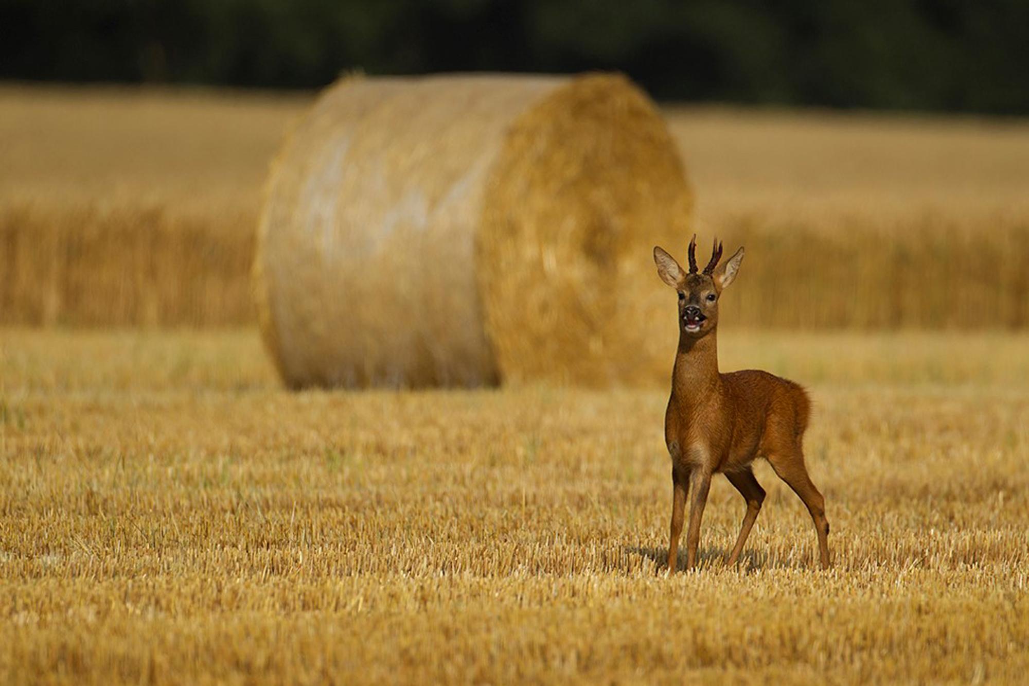Autumn. British Seasons winner 2015, British Wildlife Photography Awards