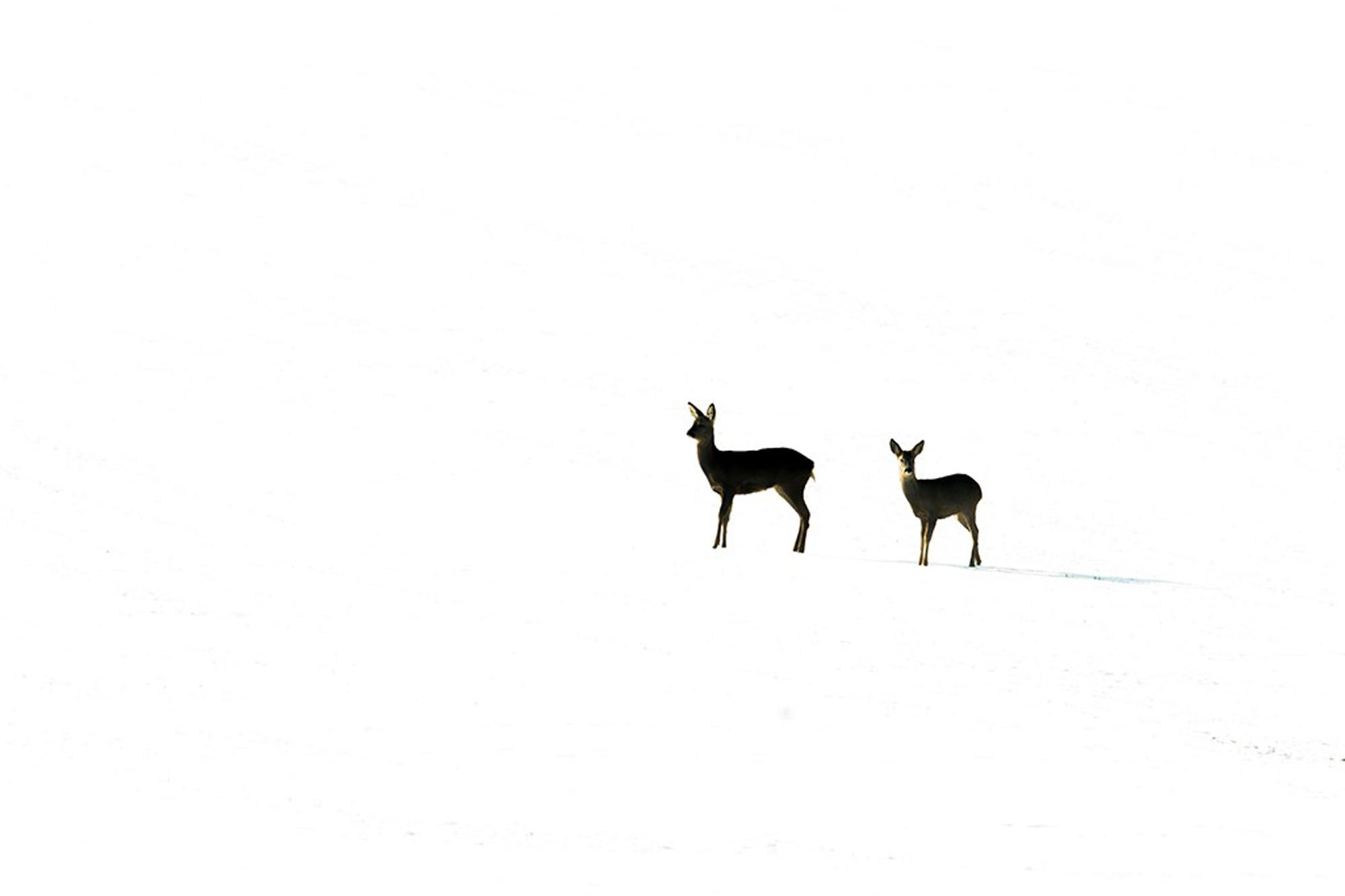Winter. British Seasons winner 2015, British Wildlife Photography Awards