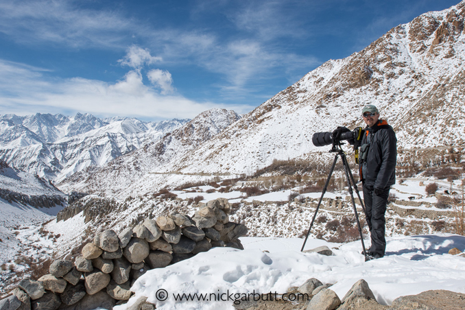 Patiently scanning the slopes for snow leopards.