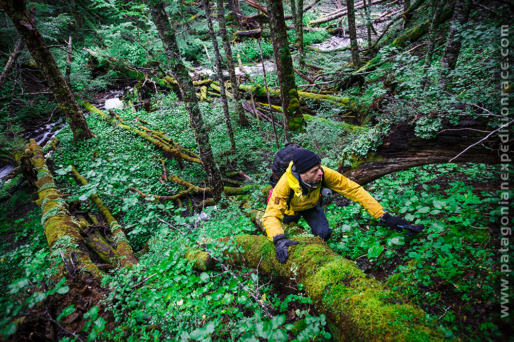 Chris Near in the dense forest on the last trekking part of the race. Photo: Ulrik Hasemann