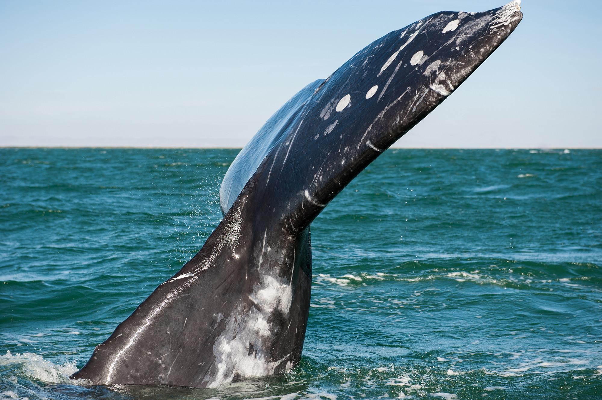 WhaleWatchingBaja-opt