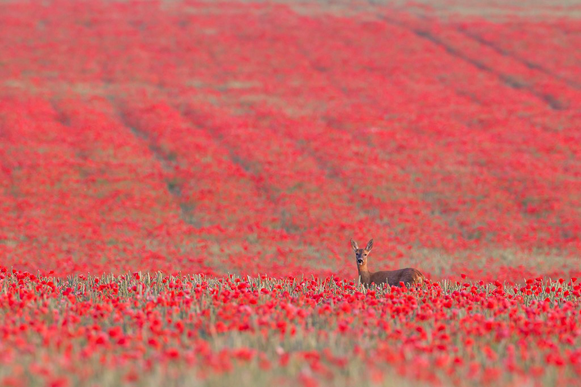 Summer. British Seasons winner 2015, British Wildlife Photography Awards