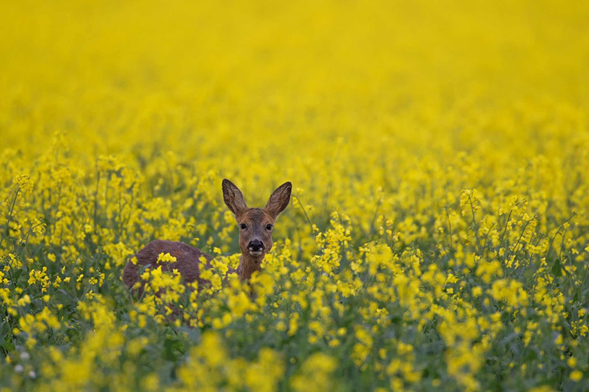 Spring. British Seasons winner 2015, British Wildlife Photography Awards