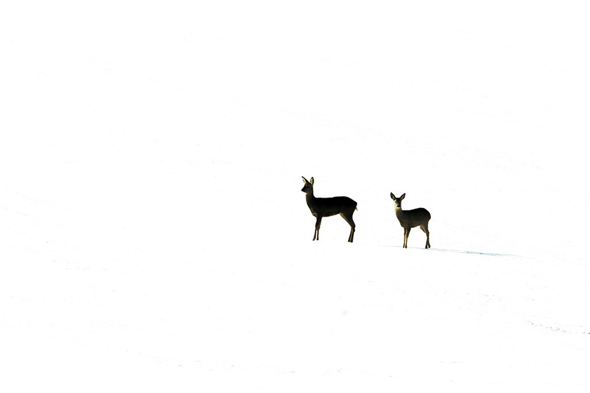 Winter. British Seasons winner 2015, British Wildlife Photography Awards