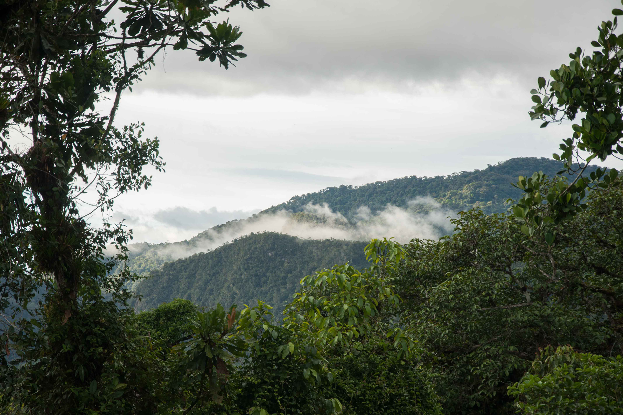 View of one of the ridges, Nangaritza Reserve, Ecuador.