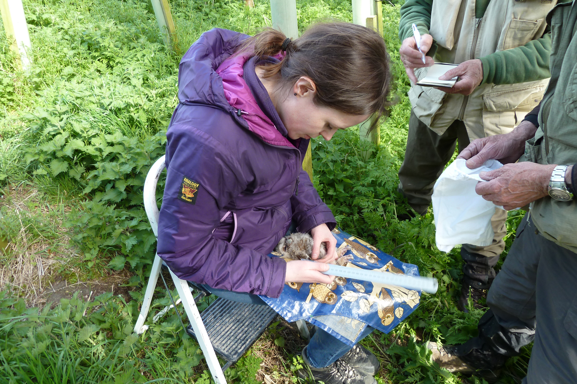 Emily Joáchim ringing a Tawny Owl chick.
