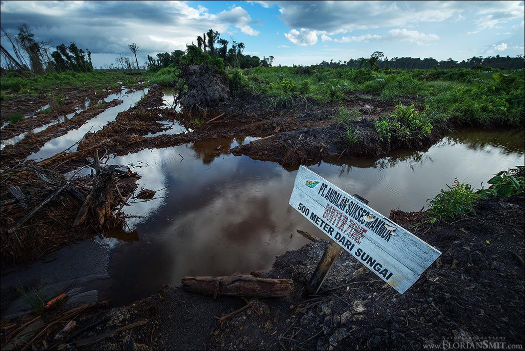 Urwald-Zerstörung auf Borneo