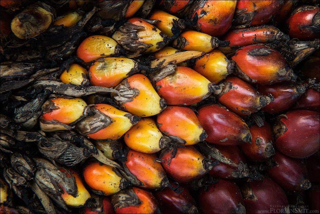 Palmfrüchte