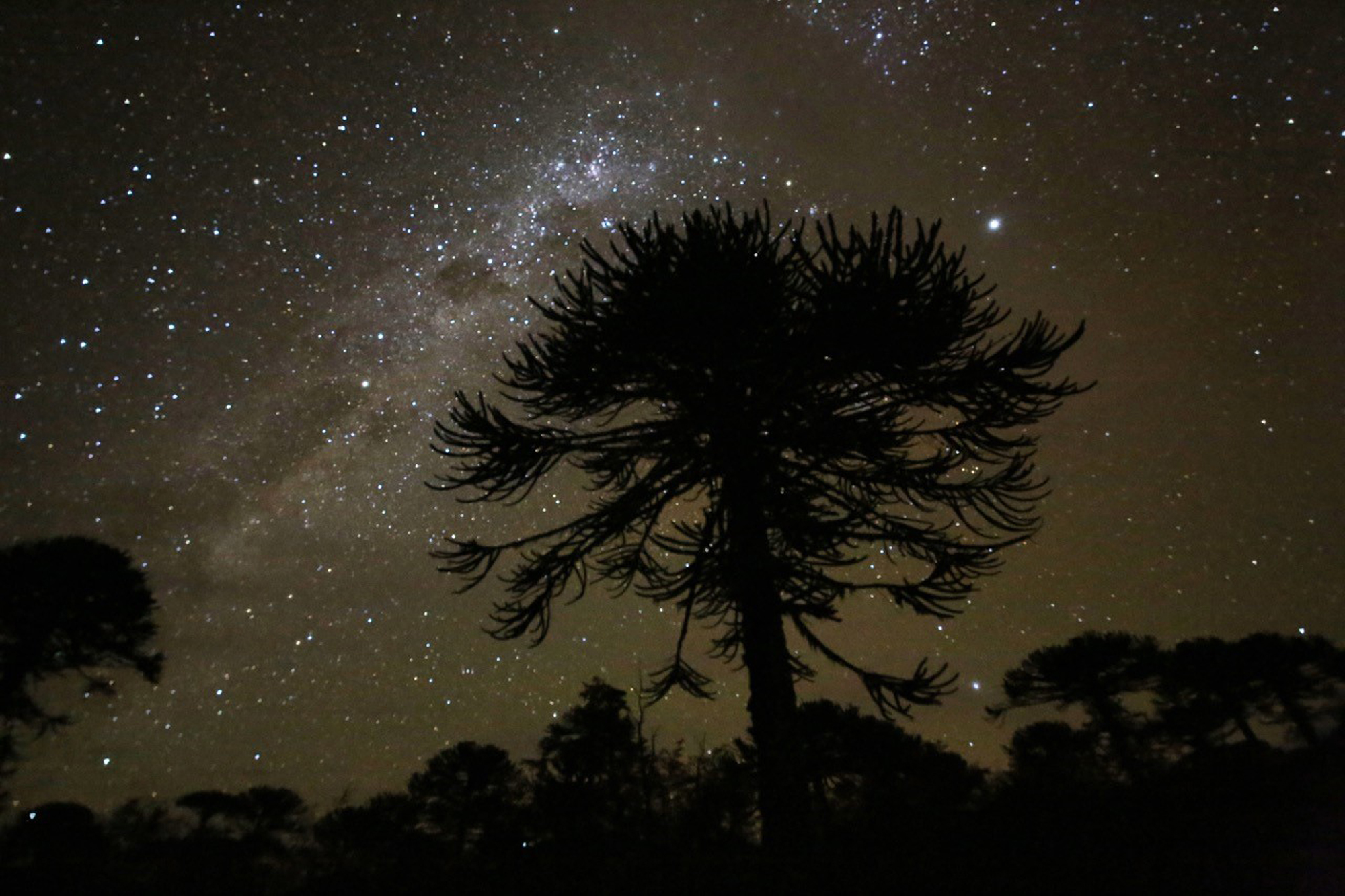 Milky Way, Conguillio National Park, Chile