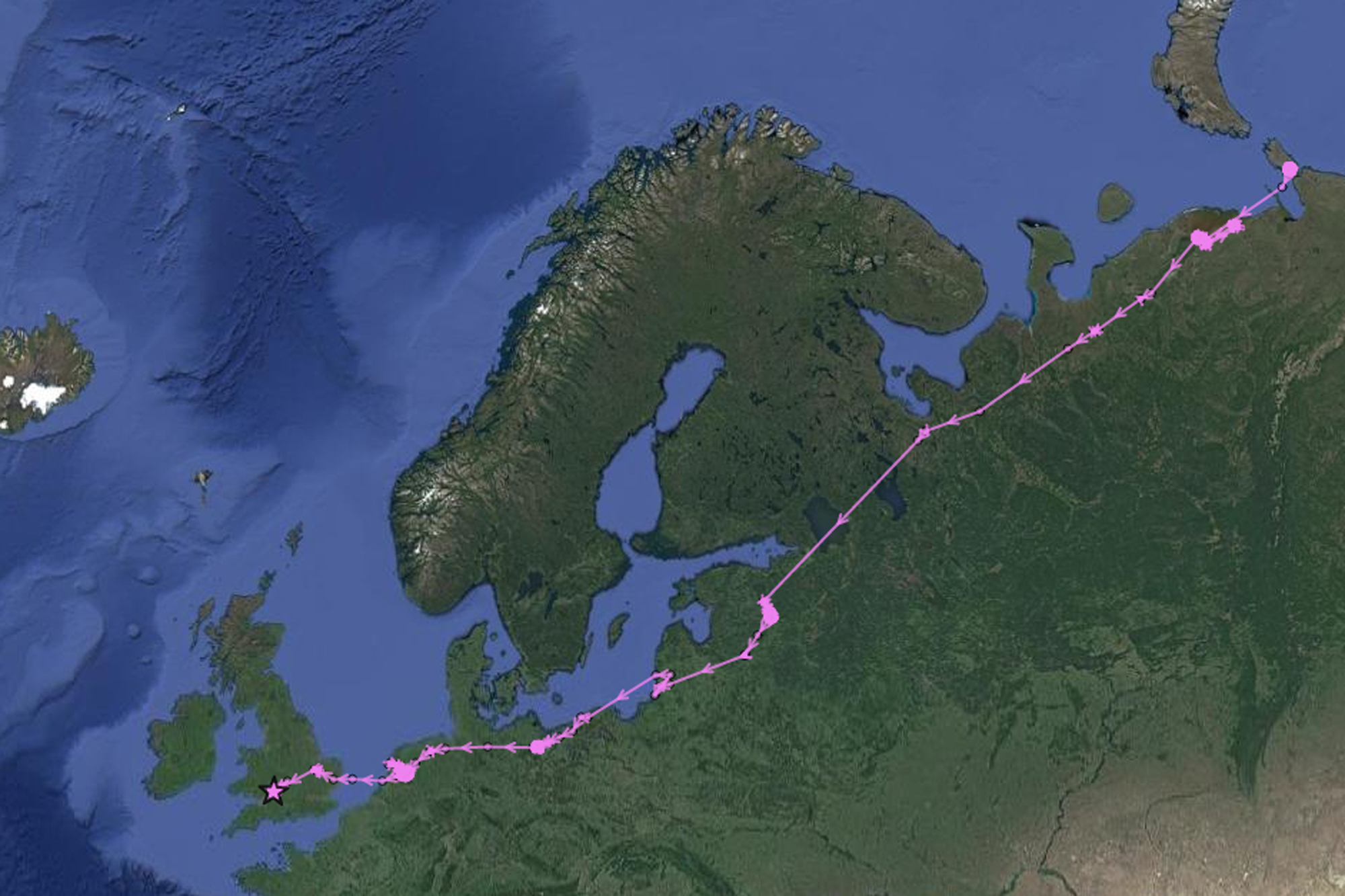 Maisie's migration route